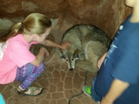 Not everyday you get to pet a wolf
